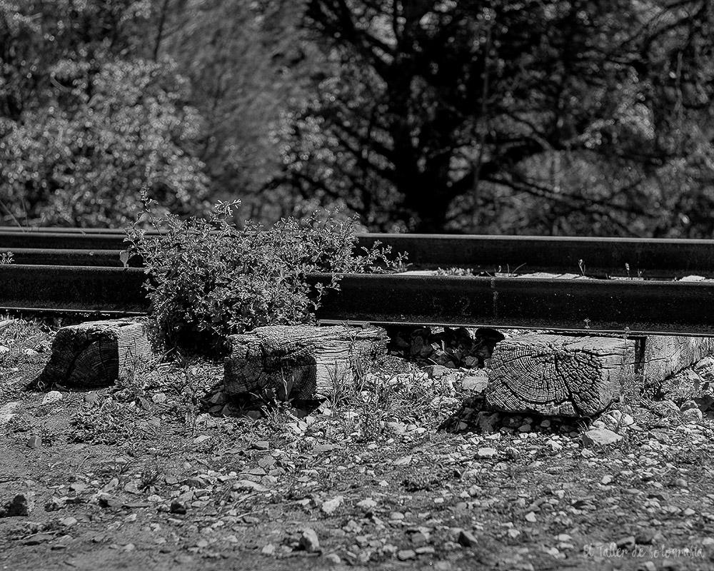 Detalle de una via de tren abandonada en Valladolid en blanco y negro